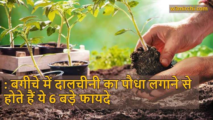 6 Benefits Of Planting Cinnamon Tree In The Garden