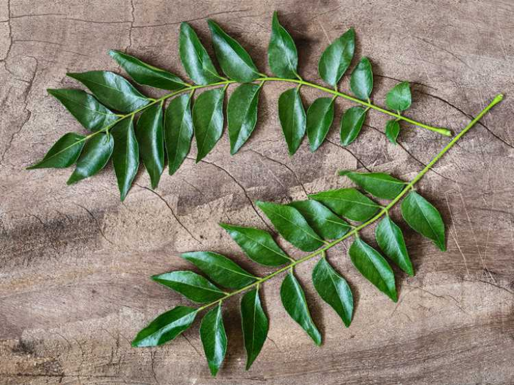 Curry leaves are beneficial for health
