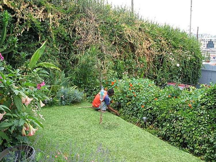 9 natural weed killer for home garden