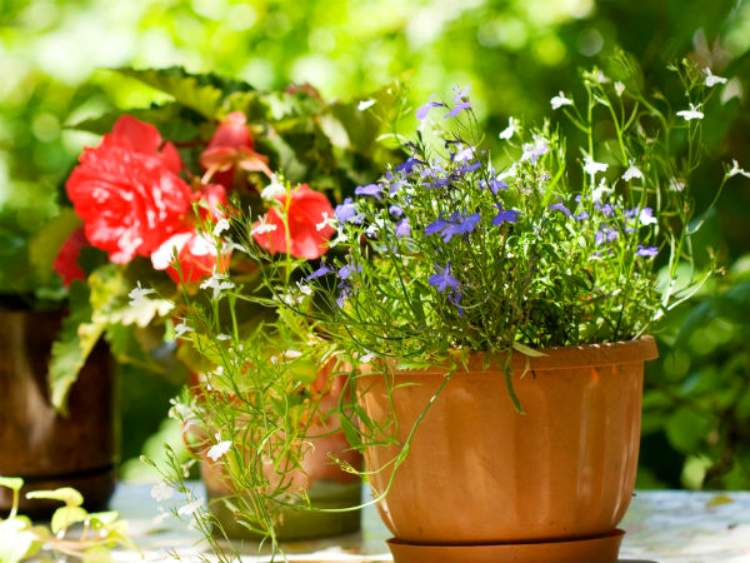 Tips for growing  best herbs in containers