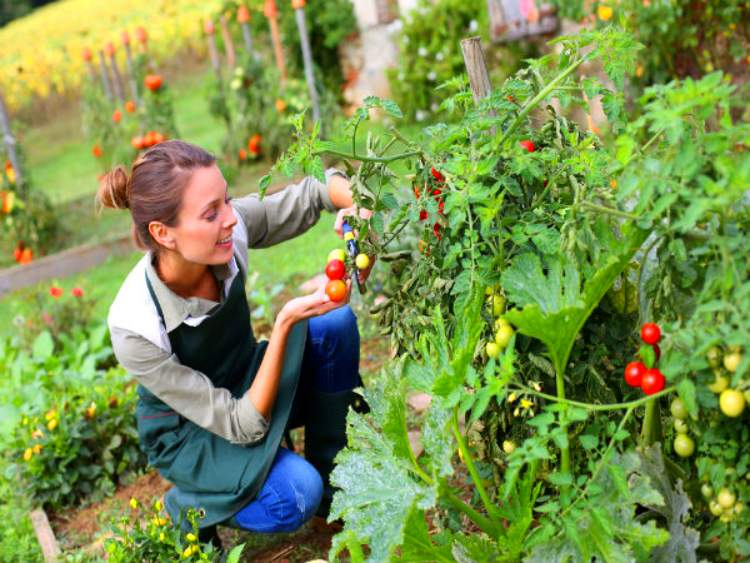 Why is it important to have a garden at home?