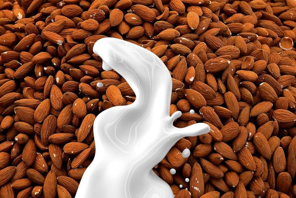 How to make vegan milks at home?