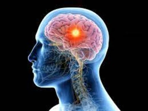 Unknown and surprising facts about human brain