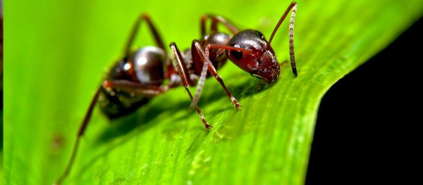 Amazing fun facts about ants