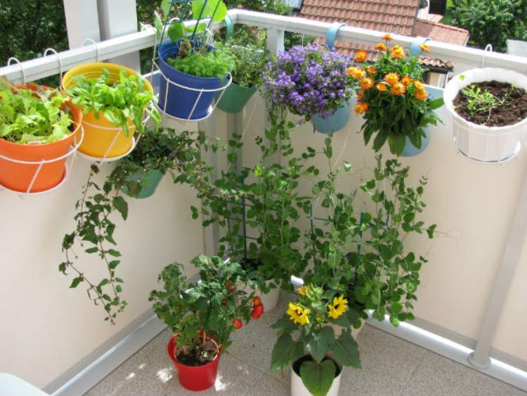 Important of home garden