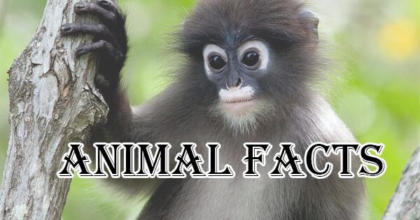 Animal Facts, जानवरों के बारे में रोचक तथ्य