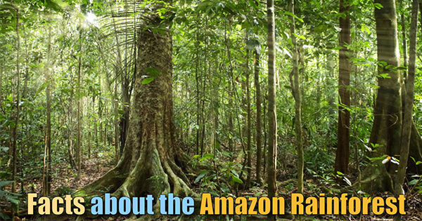 Facts on Amazon Rainfoest, अमेज़न वर्षावन के बारे में तथ्य