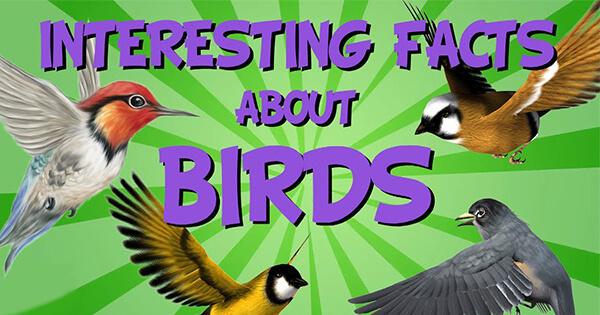 Facts on Birds, चिड़ियों के बारे में तथ्य हिन्दी में