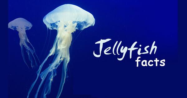 Facts on jellyfish, जेलिफ़िश से जुड़े रोचक तथ्य