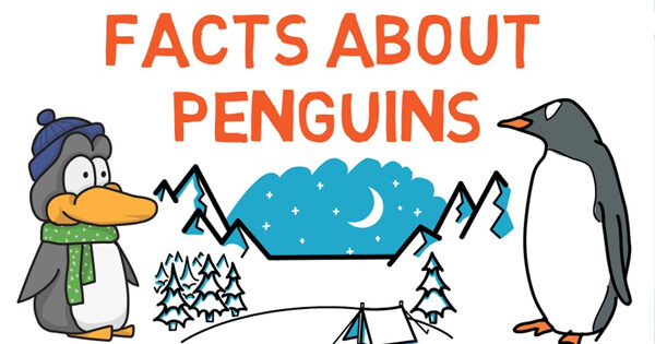 Facts on Penguins, Facts on Penguins