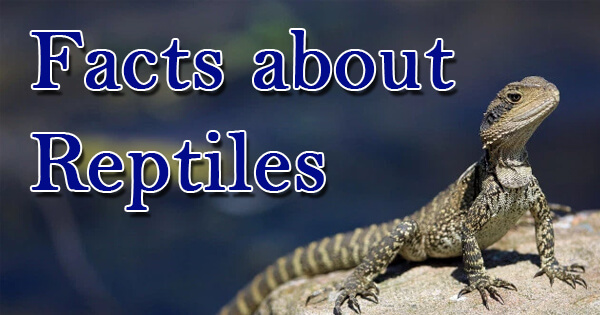 Facts on reptiles, सरीसृप पर तथ्य