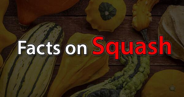 Facts on Squash, स्क्वैश पर तथ्य