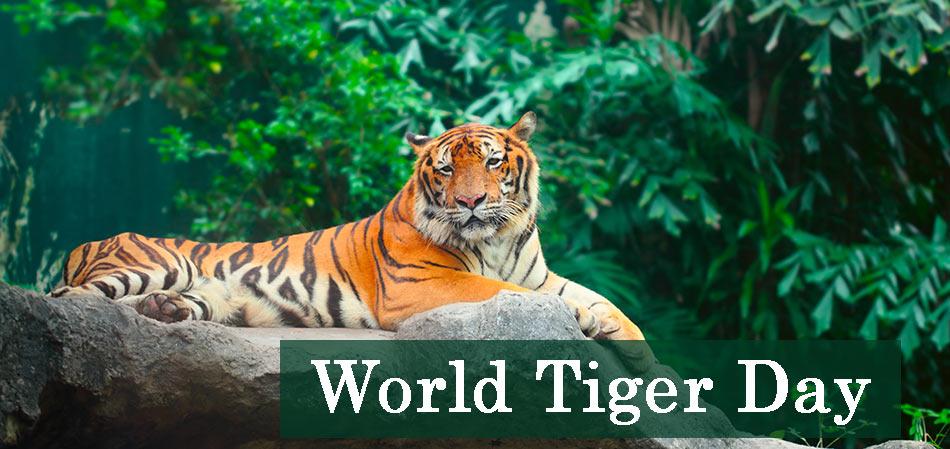 World Tiger Day Image