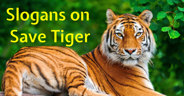 Slogans on Save Tigers